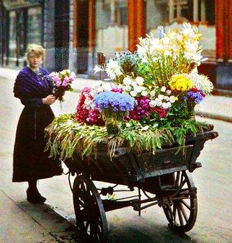 aimer les fleurs
