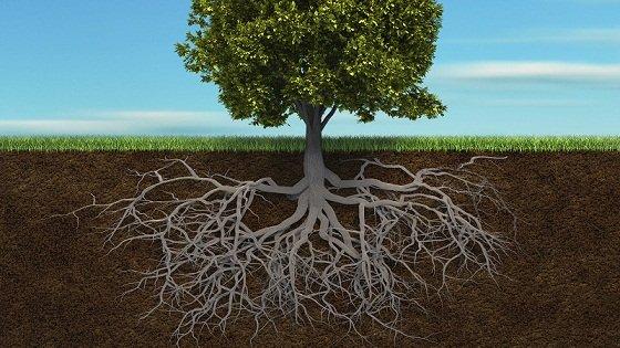 arbres dans les rêves