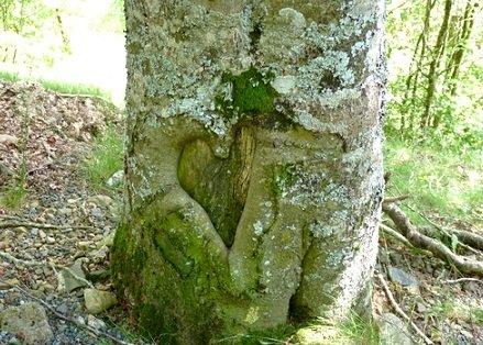 symbole nature