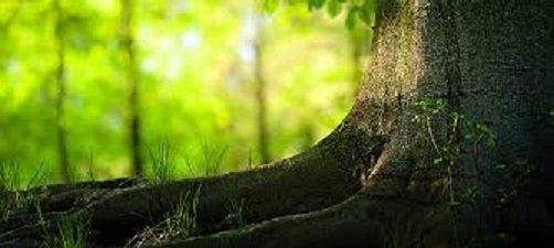 arbres guérisseurs