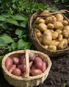 devas du potager