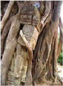 arbre inversé