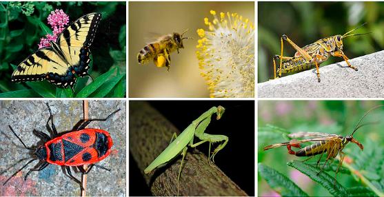 insectes blog francesca