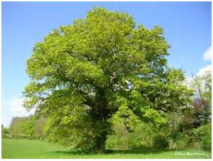 le chêne chez francesca