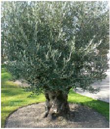 olivier chez francesca