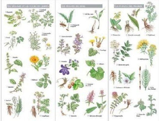 Plantes magiques