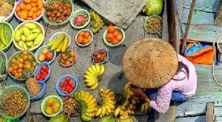 Consomation de légumes