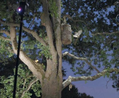 1 - arbre oiseau