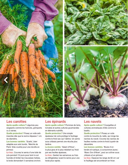 1 - légumes