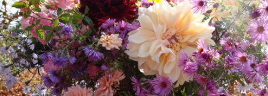 Les fleurs symboliques – Science Sacrée
