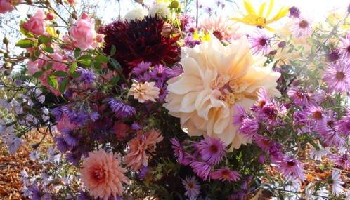 Brassée de fleurs